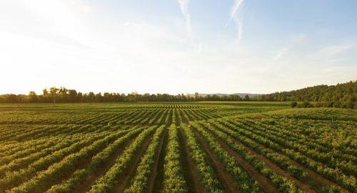 """""""Otkrivanje ruralne baštine – autohtona proizvodnja fermentiranih pića za lokalnu i ekološku održivost"""""""